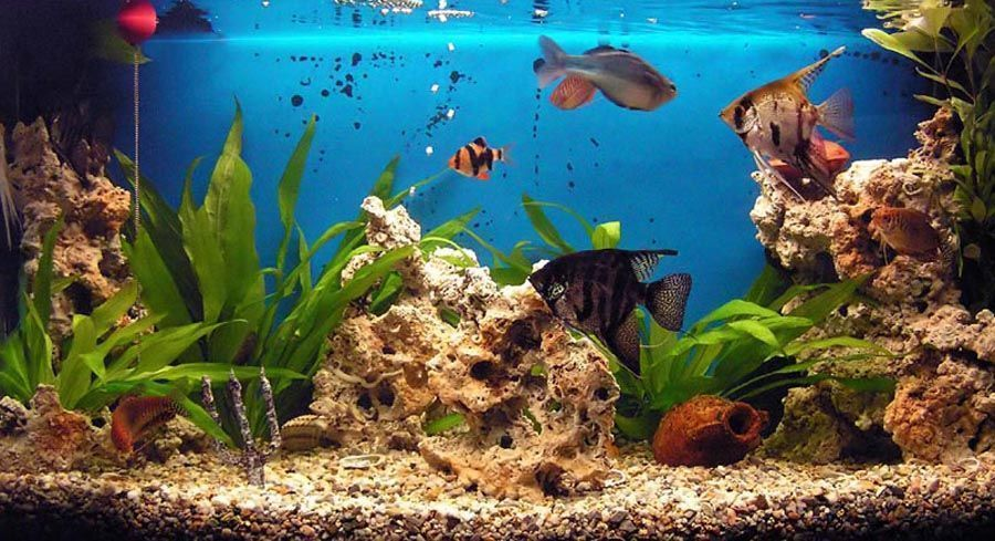 Desktop background fond d 39 cran gratuit aquarium qui bouge for Image de fond ecran qui bouge gratuit