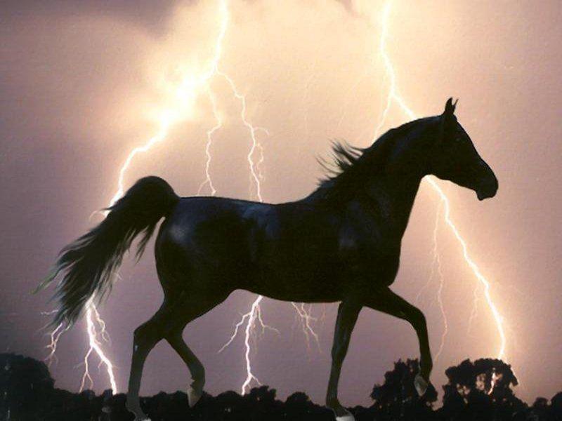 Jeux Gratuit Jeux action Jeux cheval Jeux course jjeuxgratuit